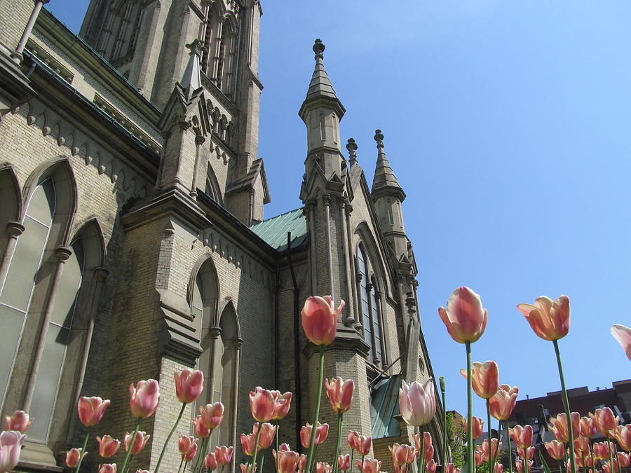 Tulip Photograph - Tulip With The Church by Alfred Ng