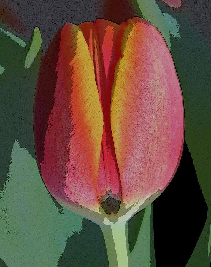 Tulip Digital Art - Tulip1 by Valerie Timmons