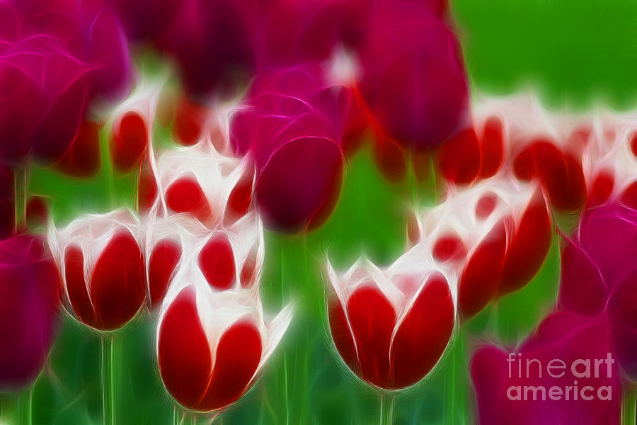 Tulip Photograph - Tulips-6848-fractal by Gary Gingrich Galleries