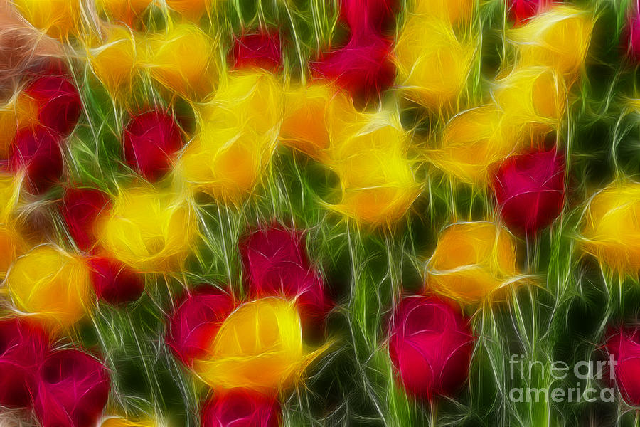 Tulip Photograph - Tulips-7106-fractal by Gary Gingrich Galleries