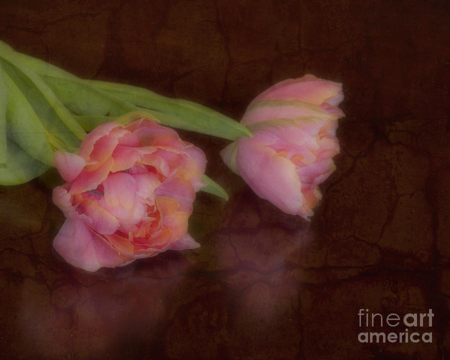 Pink Photograph - Tulips by Alana Ranney