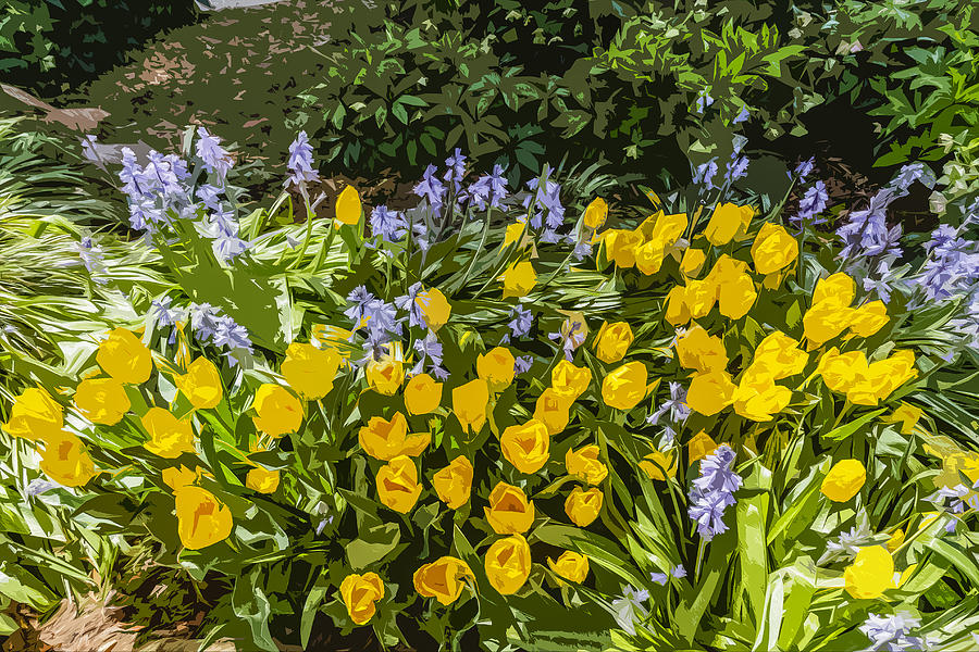Tulips Photograph - Tulips And Bluebells by Gary Cowling