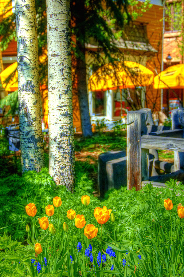 Tulips And Patio 6121 Photograph