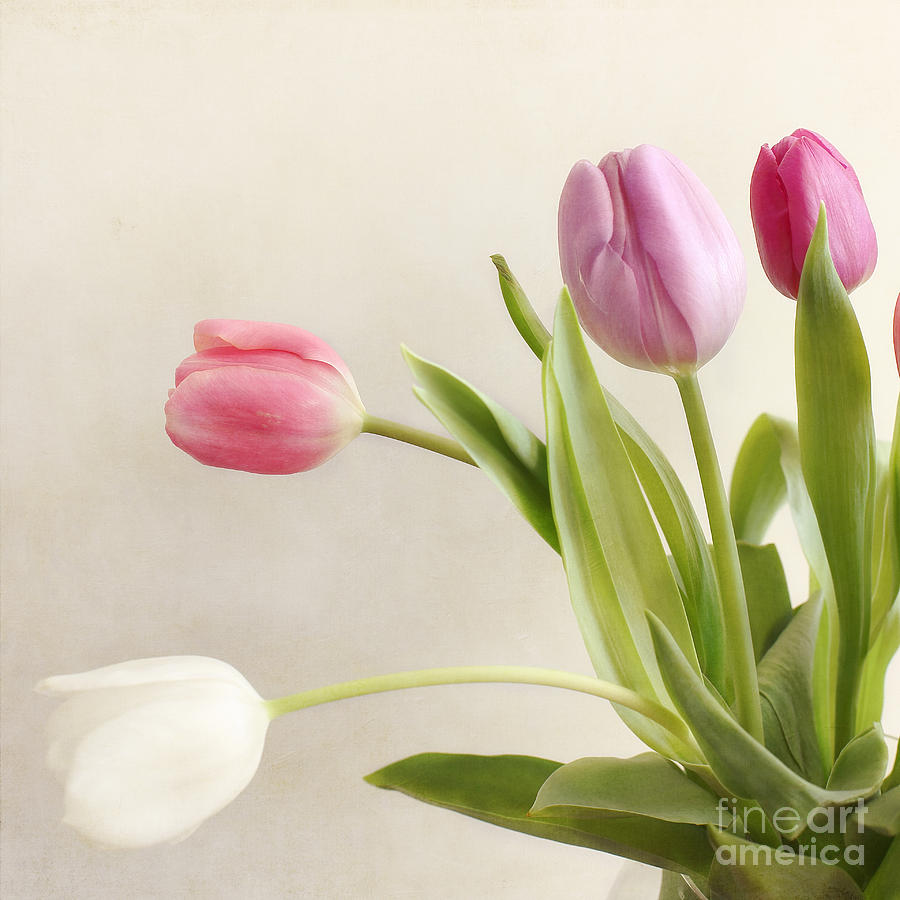 Tulips Photograph - Tulips by LHJB Photography