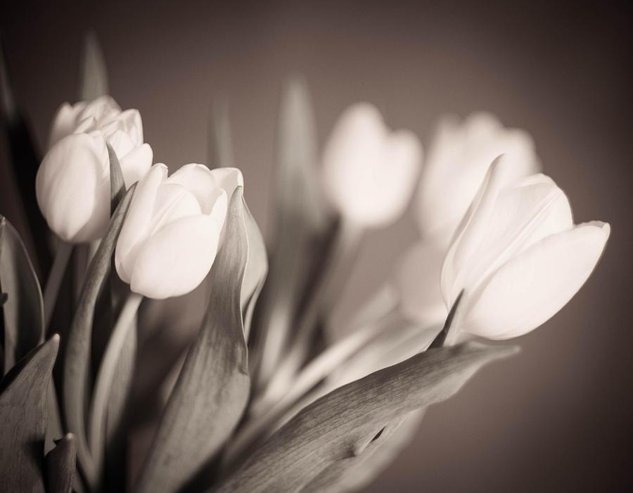 Blackandwhite Photograph - Tulips by Zina Zinchik