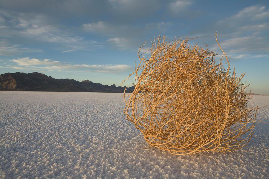 Day Photograph - Tumbleweed On The Bonneville Salt by John Burcham