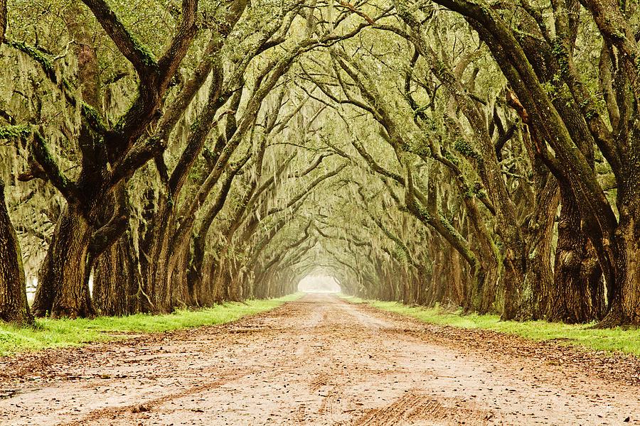 Oak Trees Photograph - Tunnel In The Trees by Scott Pellegrin