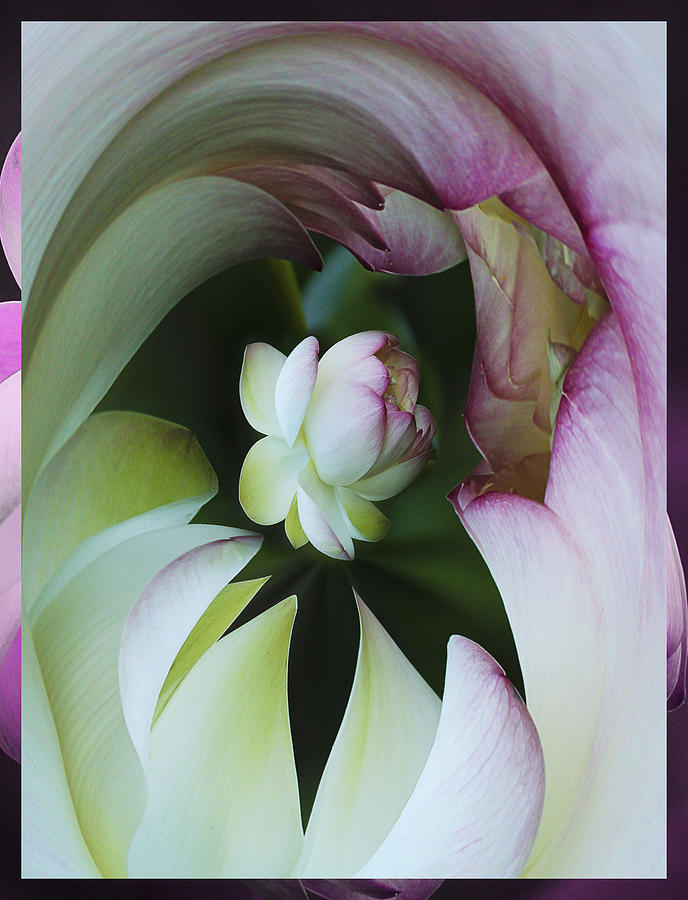Flower Photograph - Tunnel Of Lotus by Jean Noren