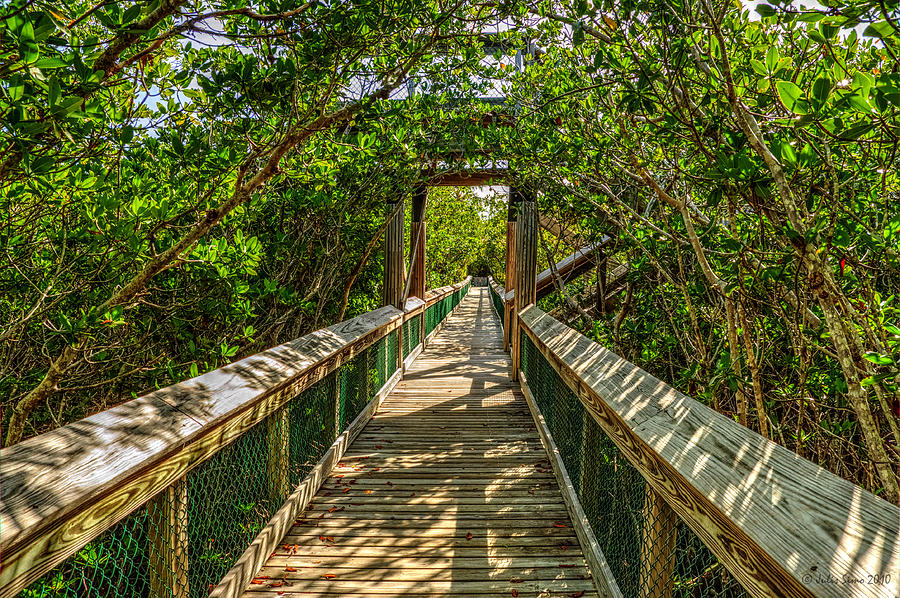Tunnel Of Mangrove Green Photograph
