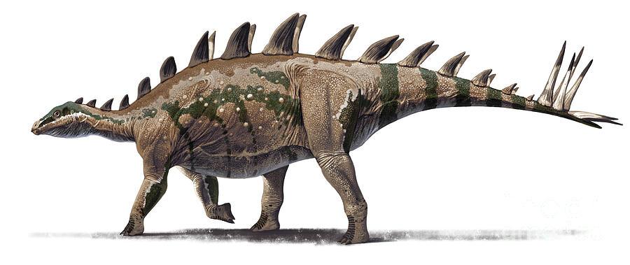 Color Image Digital Art - Tuojiangosaurus Multispinus Dinosaur by Roman Garcia Mora