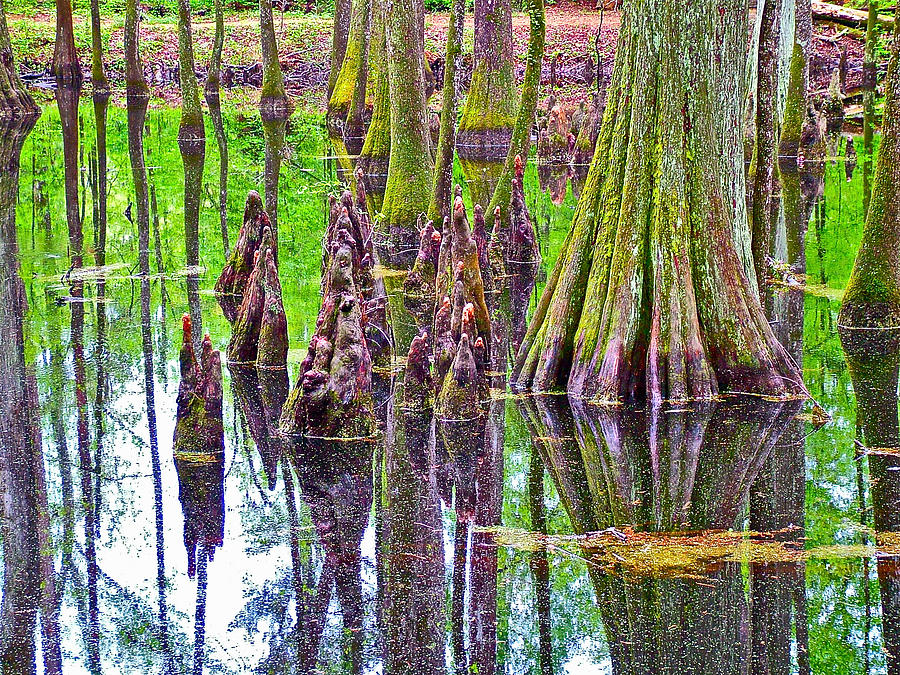 Mississippi Photograph - Tupelo/cypress Swamp Reflection At Mile 122 Of Natchez Trace Parkway-mississippi by Ruth Hager