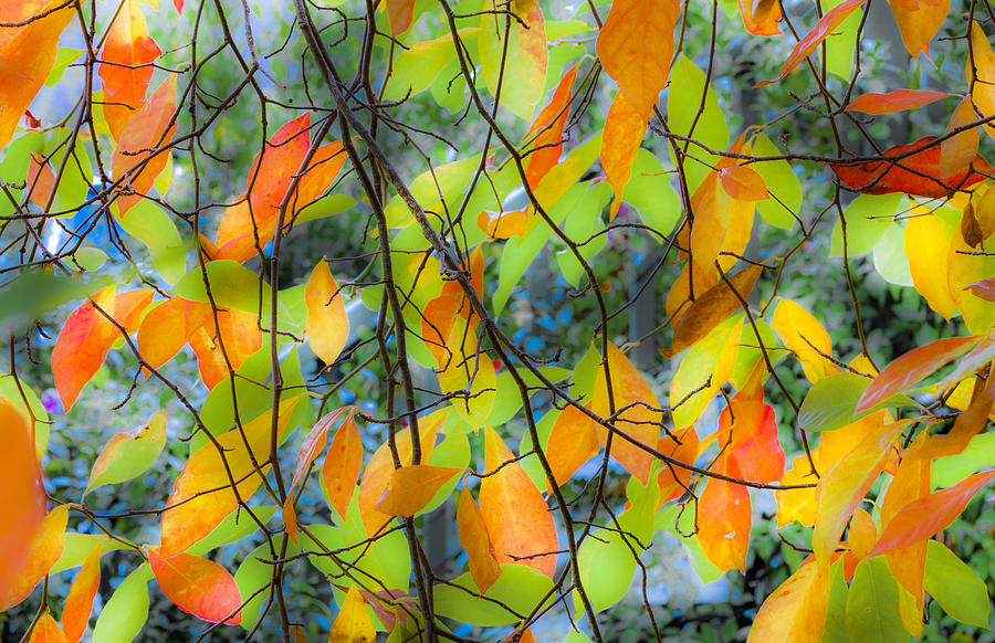 Tupelo Tapestry - Glowing Leaves by Saxon Holt