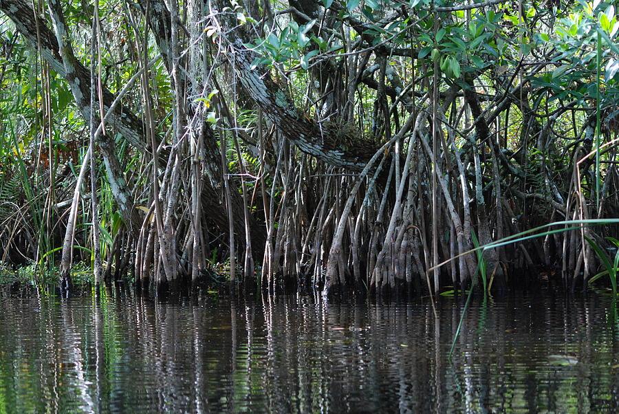 Big Cypress Photograph - Turner River 05 by Carol Kay
