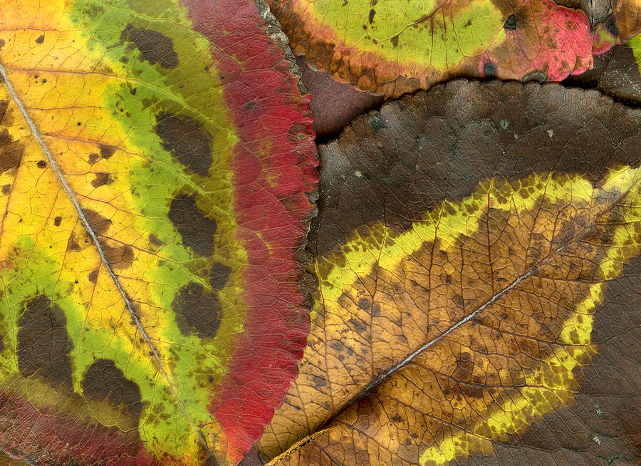Leaf Photograph - Turning Leaves 2 by Stephen Anderson