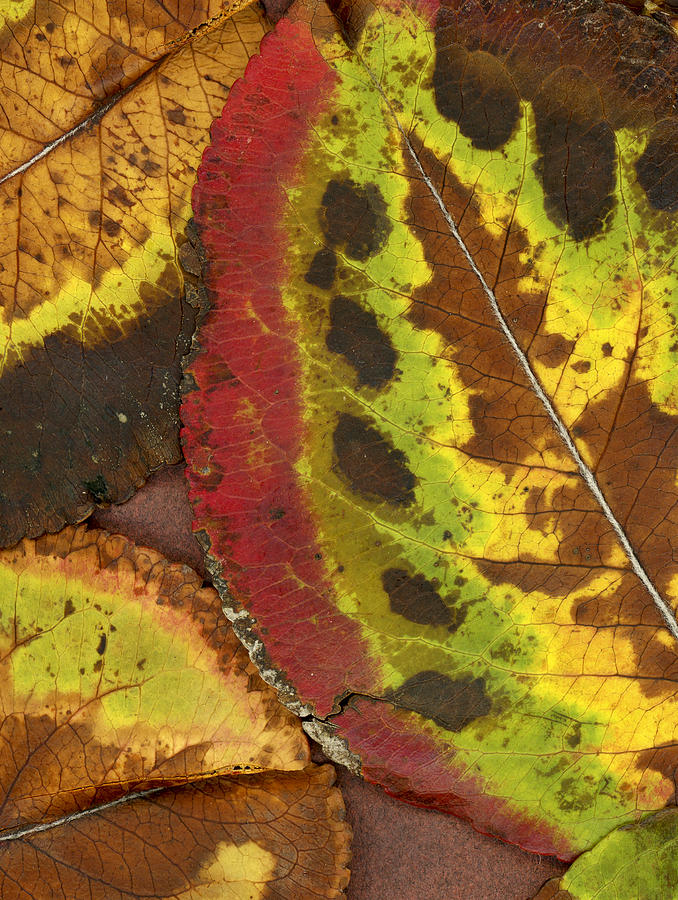 Leaf Photograph - Turning Leaves 3 by Stephen Anderson