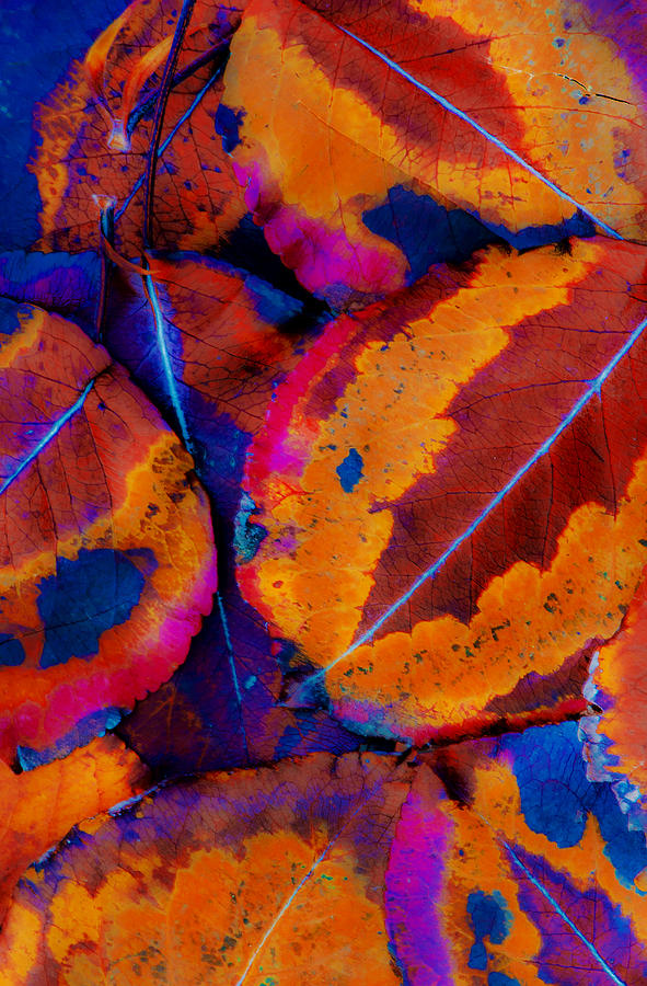 Leaf Photograph - Turning Leaves 5 by Stephen Anderson