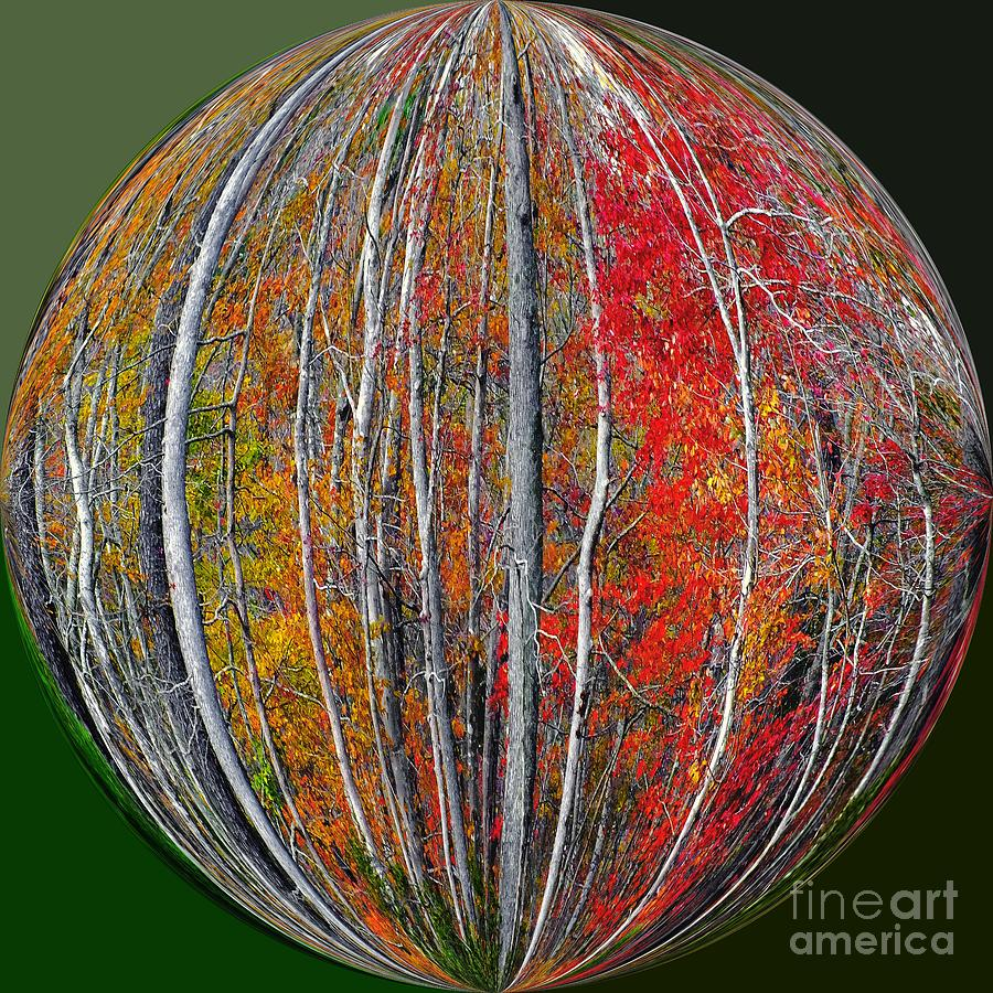 Autumn Leaves Photograph - Turning Leaves by Scott Cameron
