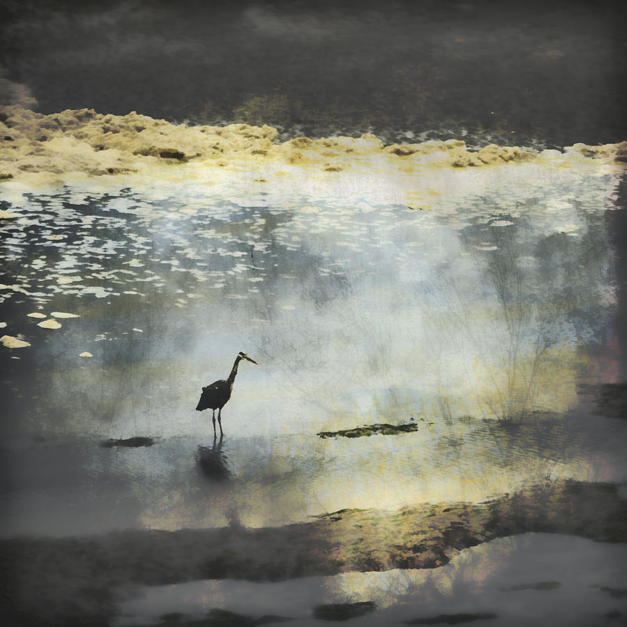 Great Blue Heron Photograph - Turning of the Tide by Carol Leigh