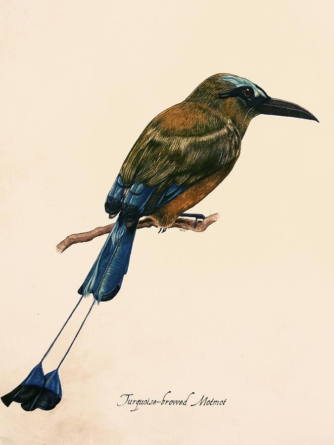 Bird Painting - Turquoise-browed Motmot by Rachel Root