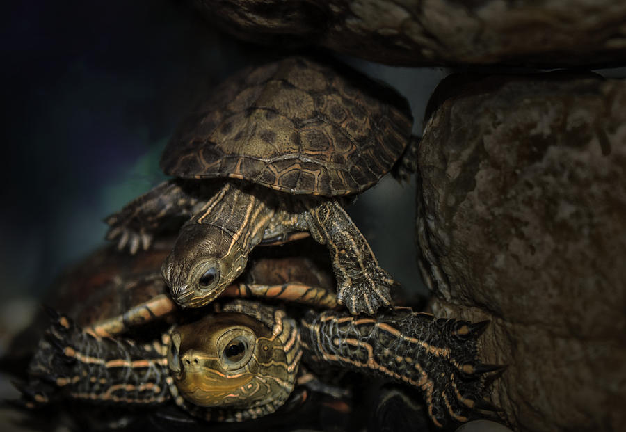 Animals Photograph - Turtels by Amr Miqdadi