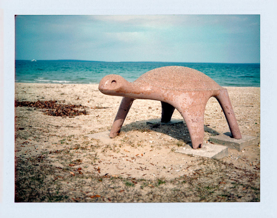 Mackinac Photograph - Turtle by Brady D Hebert