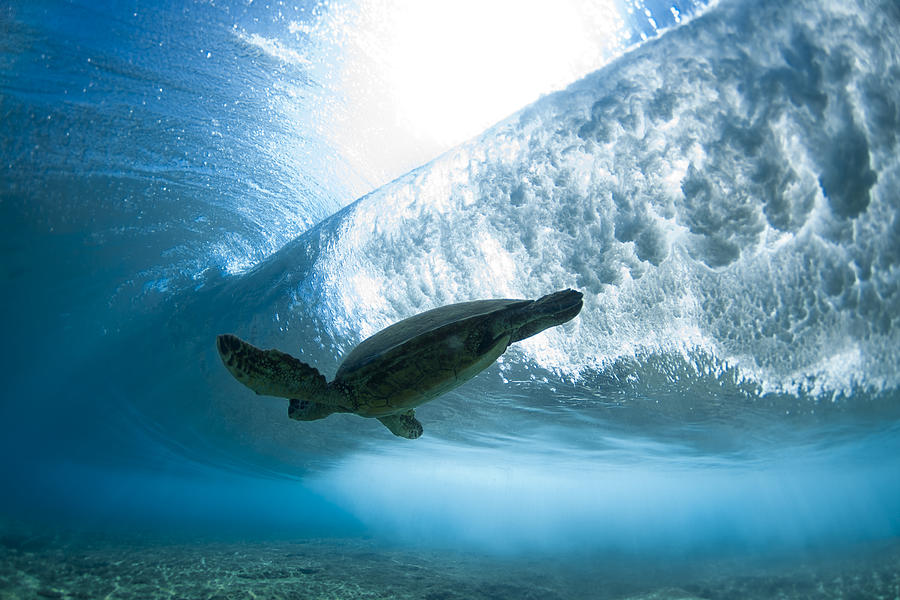 Sea Photograph - Turtle Clouds by Sean Davey