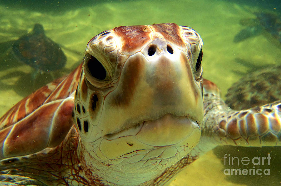 Turtle Face Photograph by Carey Chen