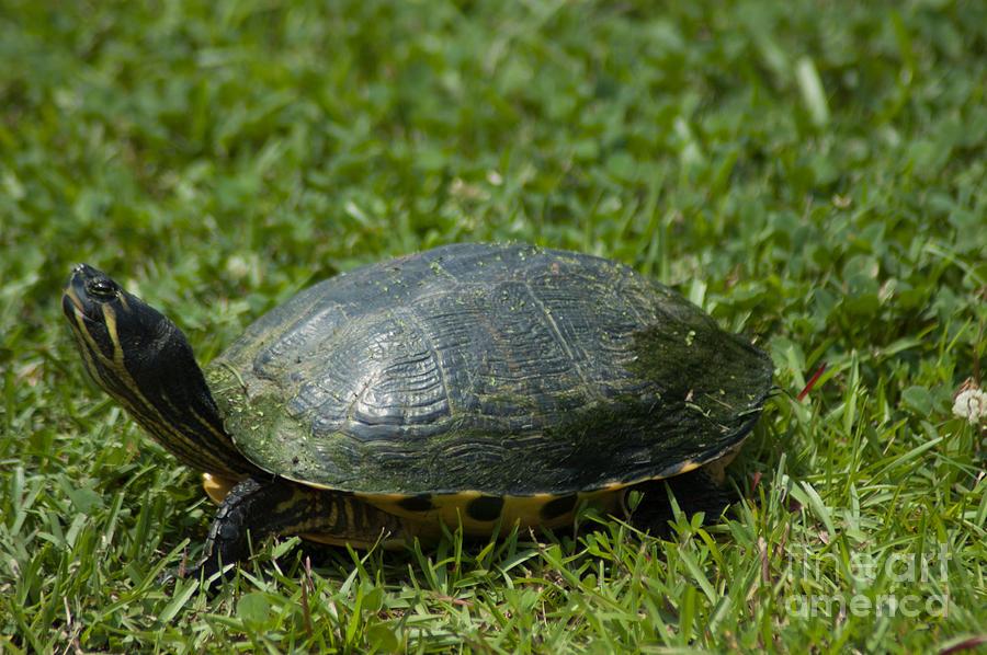 Turtle Grass Photograph
