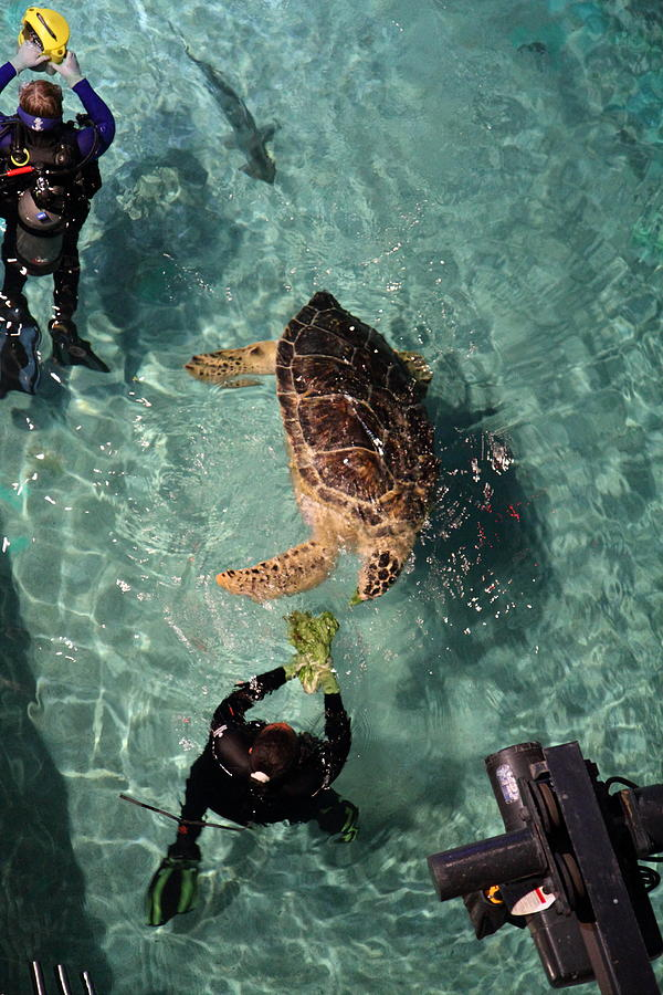 Inner Photograph - Turtle - National Aquarium In Baltimore Md - 121217 by DC Photographer
