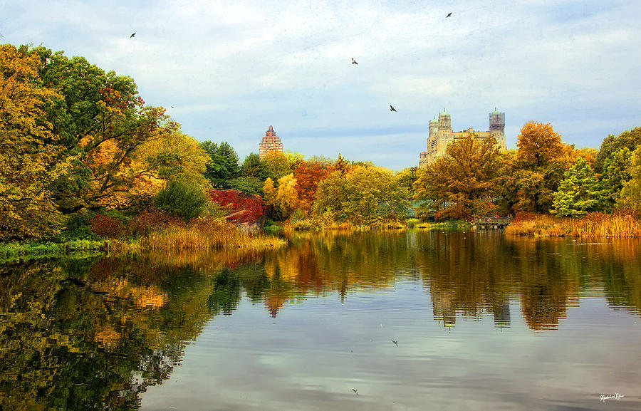 Turtle Pond 2 - Central Park - NYC by Madeline Ellis