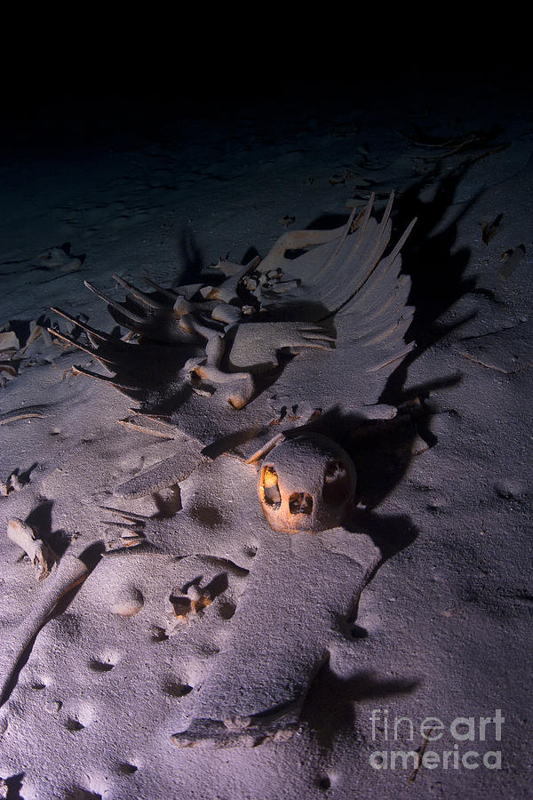 Malaysia Photograph - Turtle Skeleton Cave by Soren Egeberg