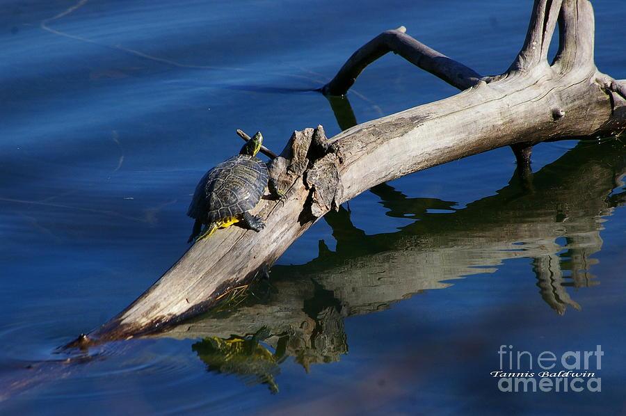 Turtle Photograph - Turtle Sun by Tannis  Baldwin
