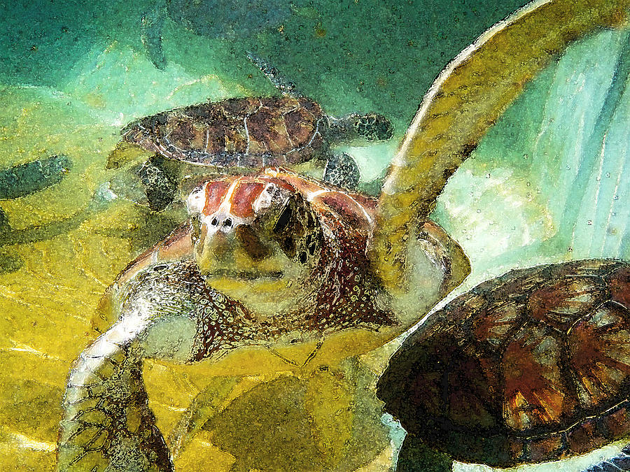 Turtle Swim Photograph