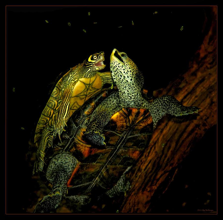 Turtle Tango by Lucy VanSwearingen