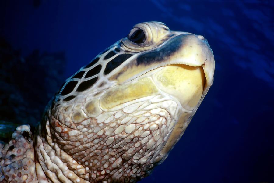 Hawaii Photograph - Turtles 1 by Dawn Eshelman