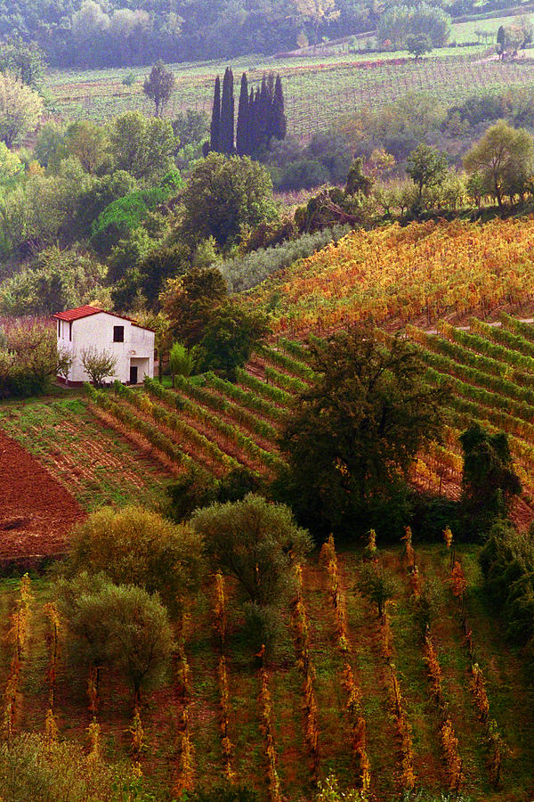 Montepulciano Photograph - Tuscan Autumn by John Galbo