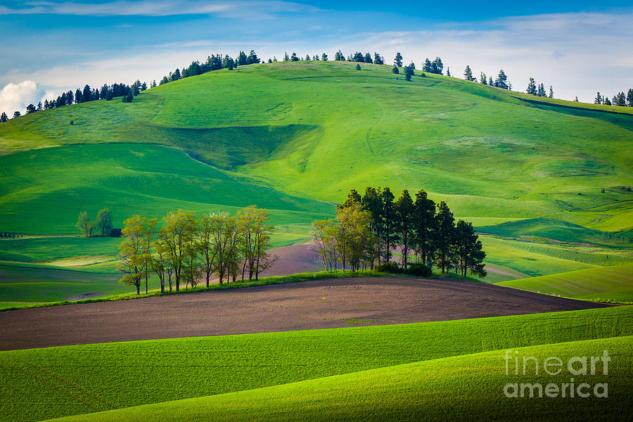America Photograph - Tuscan Palouse by Inge Johnsson