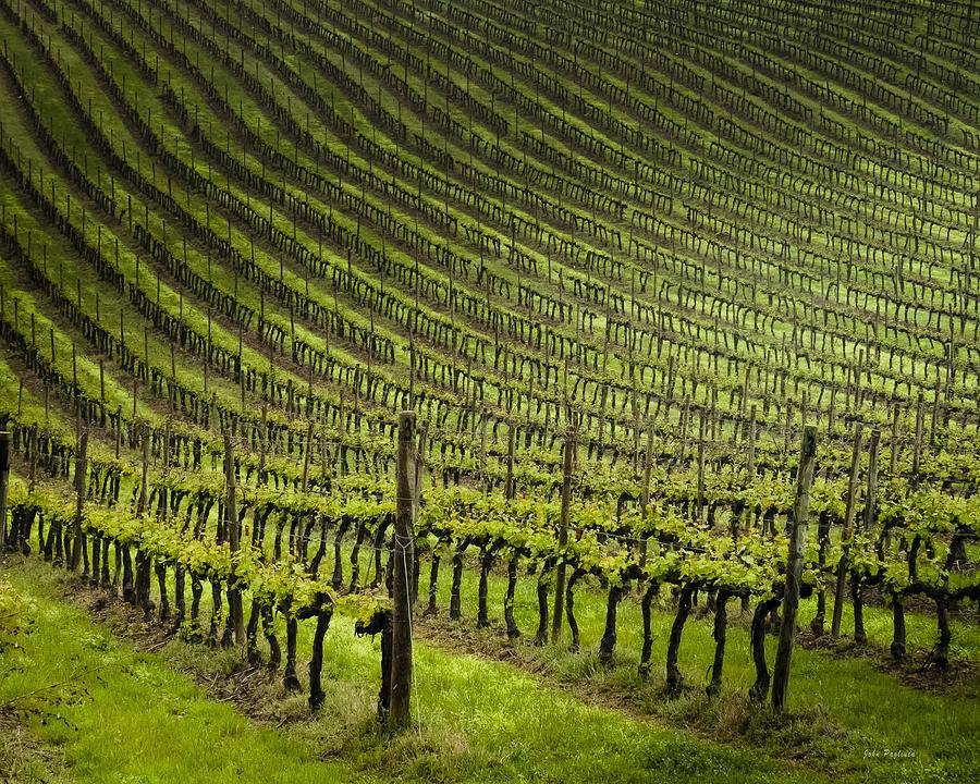 Tuscan Vineyard Series 1 by John Pagliuca