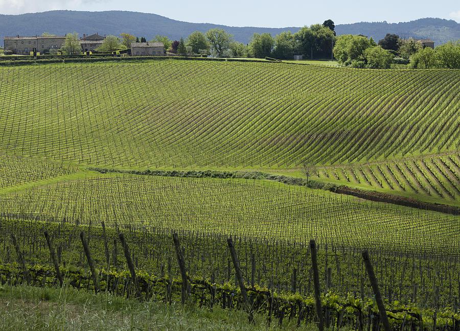 Tuscany Vineyard Series 2 by John Pagliuca