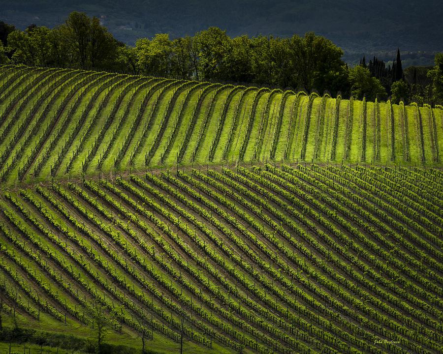 Tuscany Vineyard Series 3 by John Pagliuca