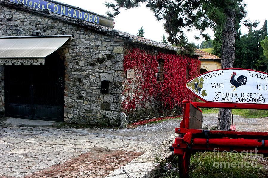 Wine Photograph - Tuscany Vineyard  by Timothy Hacker