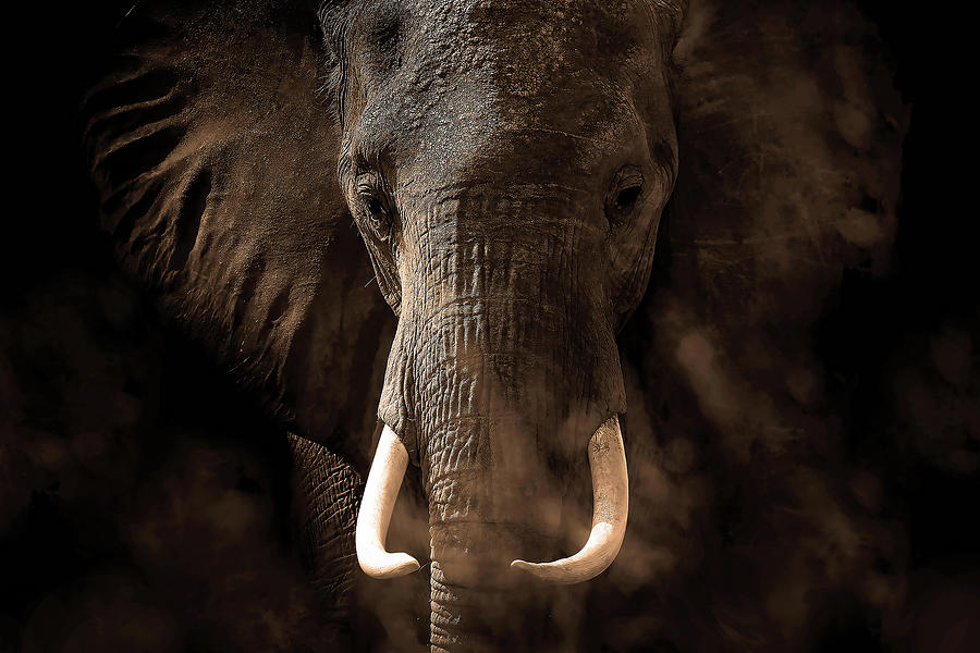 Elephant Photograph - Tusker by Bjorn Persson