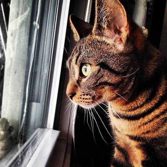 Tabby Photograph - Tuukka Wants To Go Outside And Play In by Kristine Dunn