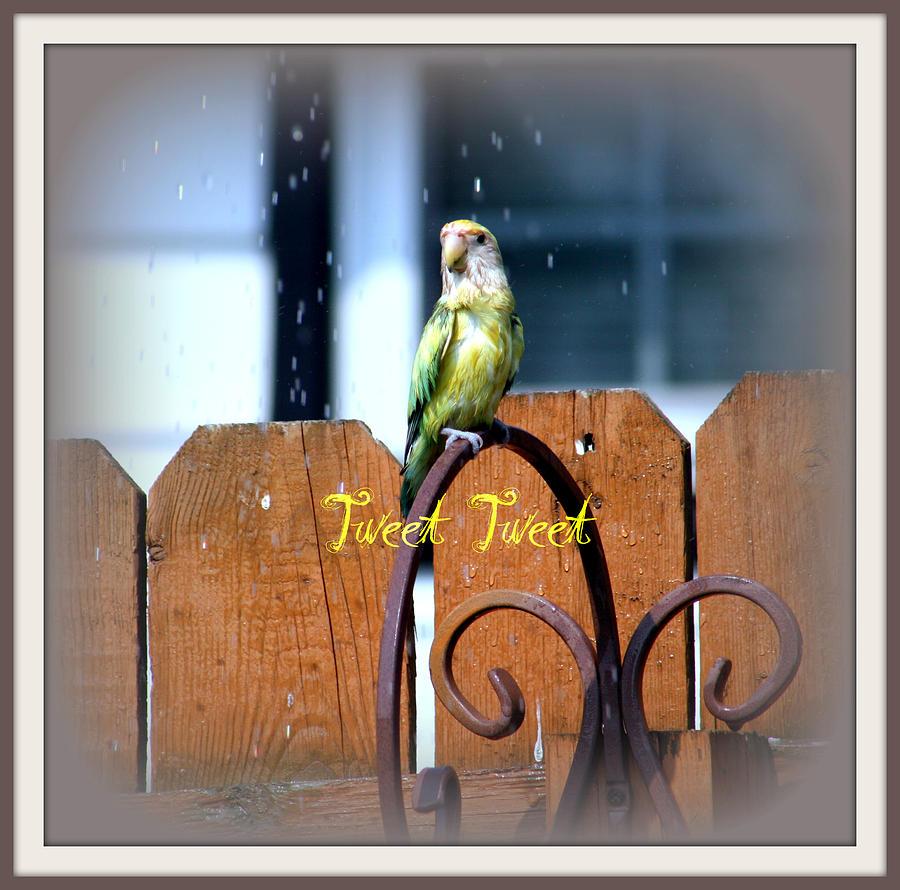 Lovebird Photograph - Tweet Tweet by Kay Novy
