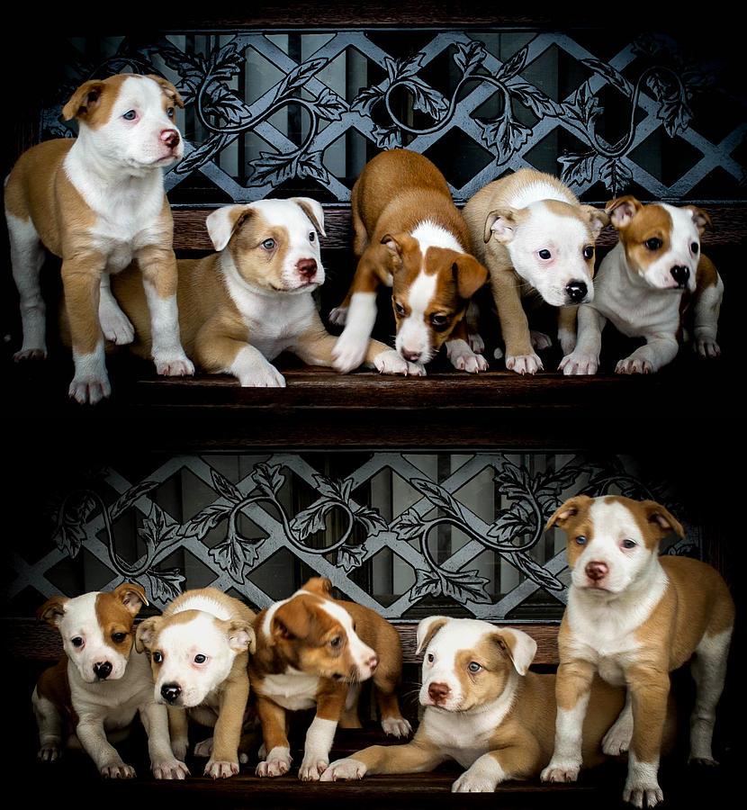 Puppies Photograph - Twice The Love by Mechala  Matthews