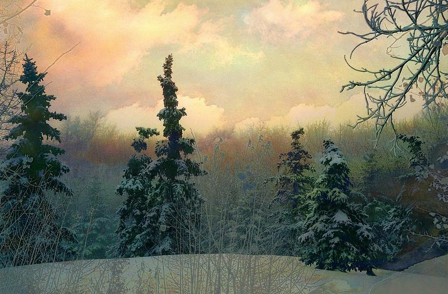 Scenery Photograph - Twilight In The Forest by Shirley Sirois