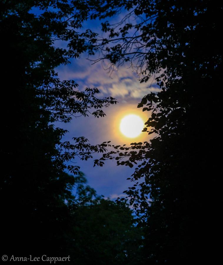 Twilight Photograph - Twilight Moon by Anna-Lee Cappaert