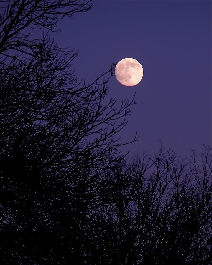 Full Moon Photograph - Twilight Moon by Rona Black