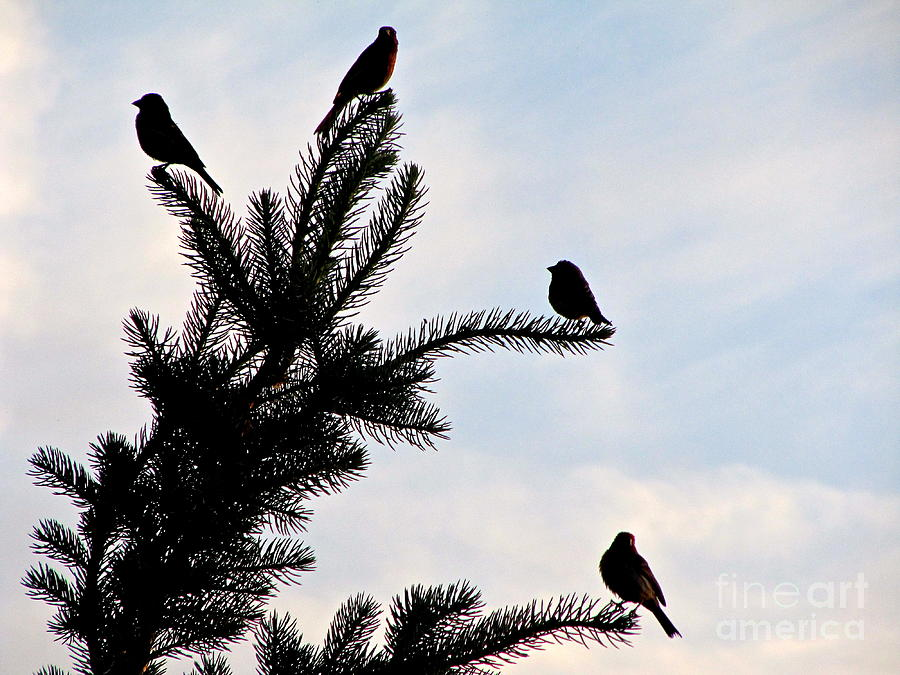 Silhouette Photograph - Twilight Silhouette by Phyllis Kaltenbach