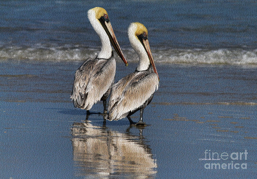 Pelicans Photograph - Twin Pelicans by Deborah Benoit